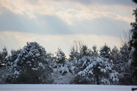 snowcovered: Winter Scene with SnowCovered Trees