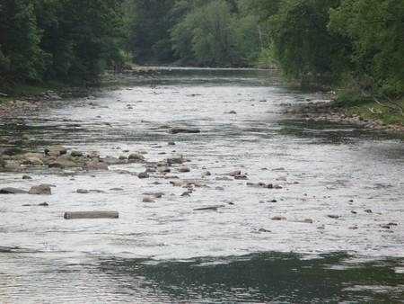 west virginia trees: Creek Flowing through Trees Stock Photo