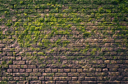 Brick wall with moss growing out of it Banco de Imagens - 43748994