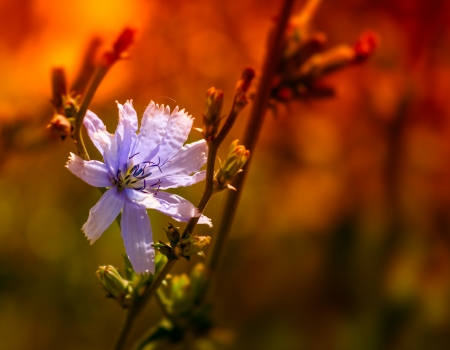 wildflower in morning light photo