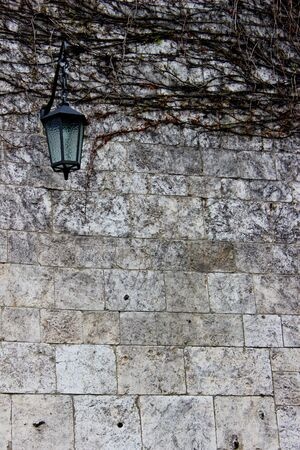close up of faded vine plant on a brick wall Stock Photo - 19446889