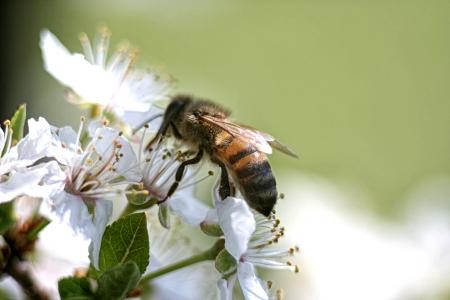 wasp: Abeja en la flor Foto de archivo