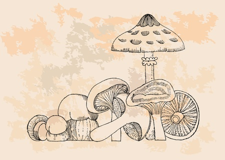 retro Mushrooms set  Vector