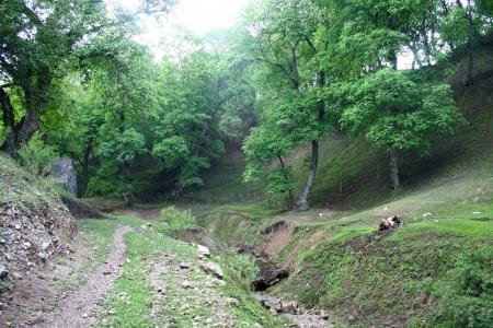 kyrgyzstan: Bosques de nuez en Arslanbob, Kirguist�n Foto de archivo
