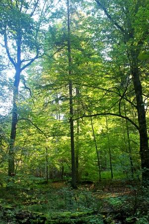Bialowieza Forest, Podlasie, Poland photo