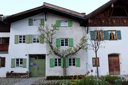 countrified: A special grown old vine tree at a countrified house in Mittenwald in Bavaria