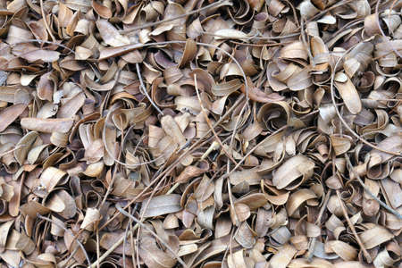 composting: Dry leaves drop on the ground to be made composting.