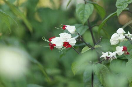 hemorragias: sangrado flor del coraz�n