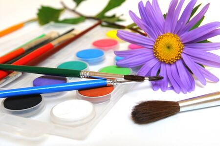 paintbox: Paintbox with water colors, paintbrushes and purple daisy  Stock Photo