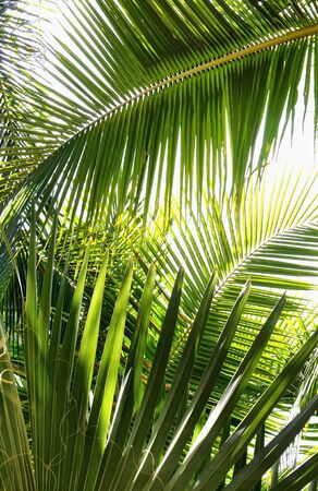 nuances: Palm Leaf Jungle