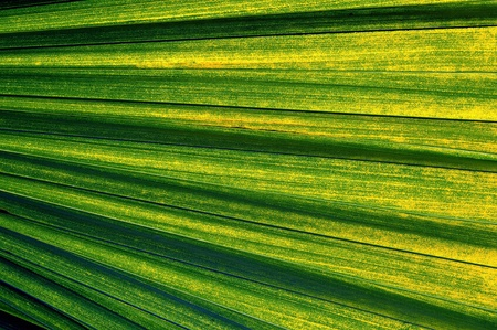 nuances: Palm leaf with various shades from green to yellow
