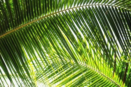 Palm leaves in various green shades  Stock Photo