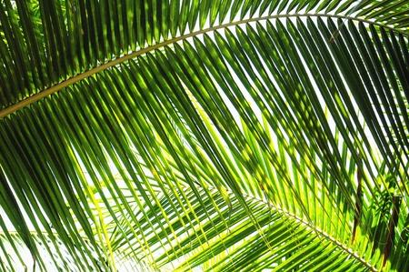 Palmbladeren in verschillende tinten groen Stockfoto