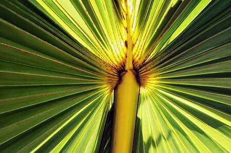 nuances: Close up of a illuminated palm leaf