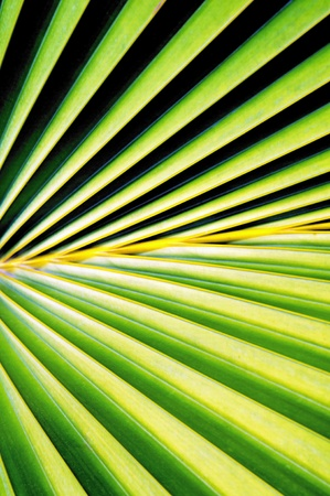 nuances: Close up of palm tree leaf