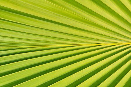 nuances: Close up of palm tree leaf
