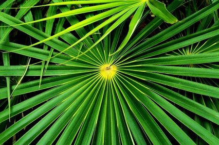 nuances: Palm tree leaf