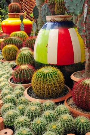 bionomics: Colorful terracotta pottery between ball-shaped cactuses Stock Photo