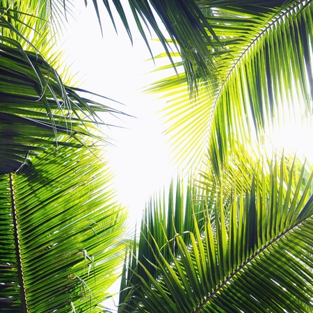 nuances: Different palm tree leaves in various green tones and shades