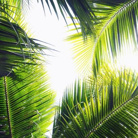 Verschillende palmbladeren in verschillende groene tinten en schakeringen Stockfoto