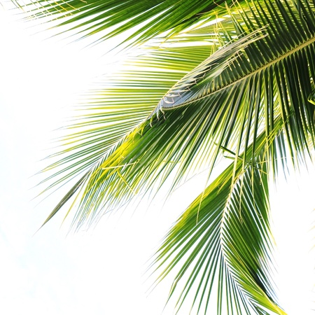 nuances: Waving palm tree leaves Stock Photo