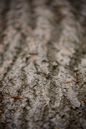 wildwood: Close up of bark texture