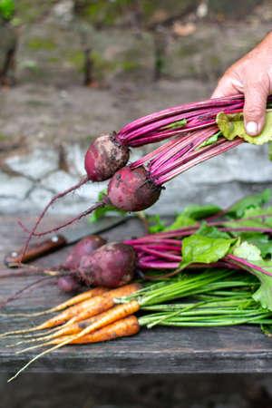 Fresh vegetables carrots, beetroots on wooden background. Harvest still life