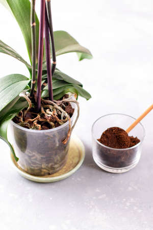 Coffee residue is applied to the tree and is a natural fertilizer. Gardening hobby