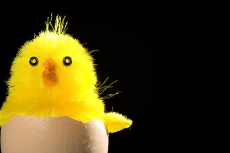 arise: Yellow chick emerges from broken eggshell against black background Stock Photo