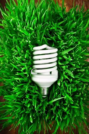 Fluorescent light bulb on grass symbolizing green energy.  photo