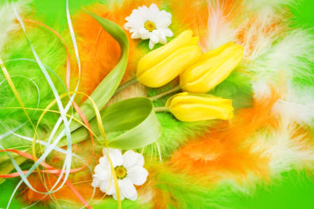 Bunch of tulips decorated with ribbons and daisy laying on colored feathers photo