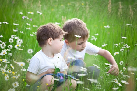Two young preschool siblings playing in green field with blooming daisies. Stock Photo - 10069843