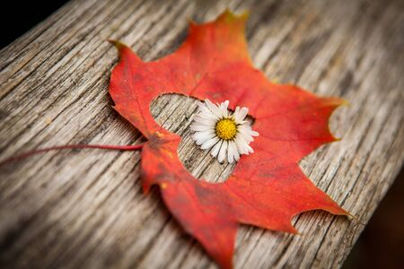 An autumn leaf with heart shaped cutout and flower.  photo
