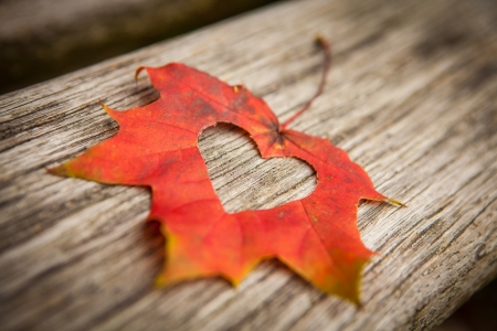 A heart in an autumn leaf on a background of grained wood. Stock Photo