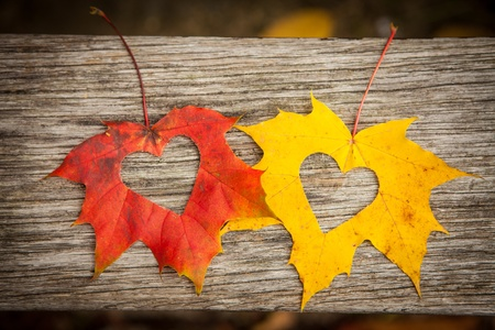 Love hearts on colorful autumn leaves with wooden background. Stock Photo - 16158819