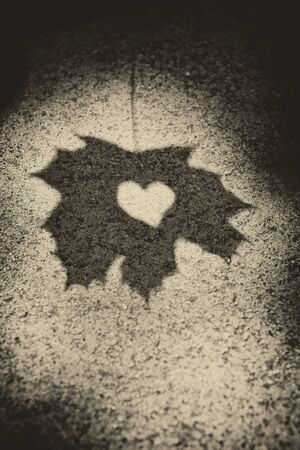 shadowy: Shadow of leaf showing love heart shape.