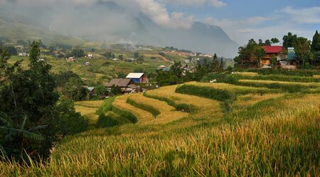 Beautiful landscape of Rice Terraces with ripened rice in Ta Van Village