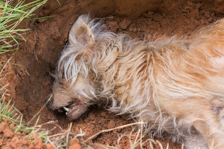 dead dog: Dead dog in grave