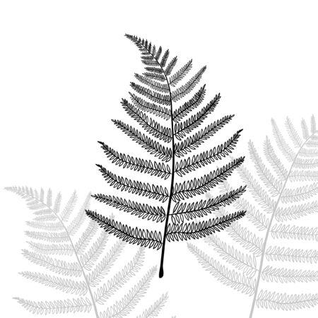 Vector illustration of fern. Hand drawn sketch. Black and white leaf
