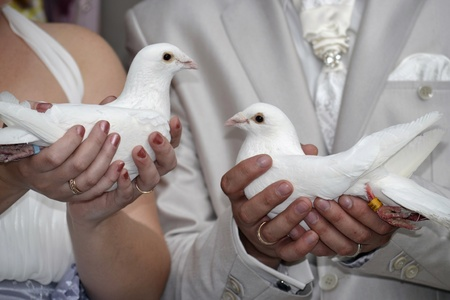 Wedding pigeons in hands of the newlyweds photo