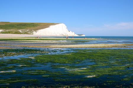 strait: Strait coast of England in the algae