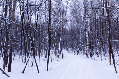 snowcovered: Snow-covered park