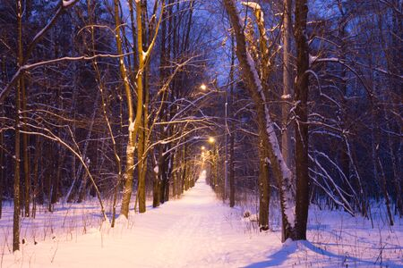 snowcovered: Night snow-covered road Stock Photo