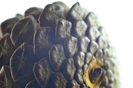 pinecone: Pinecone on a white background Stock Photo