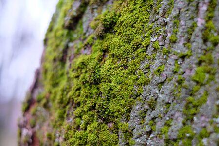 wet wallpaper: Forest moss closeup, wet, tree wallpaper decoration natural