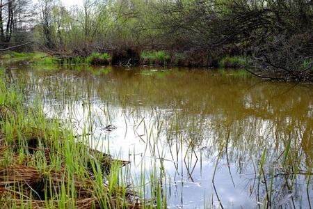 slack: river Wetlands water, manaus landscape nature swamp Stock Photo