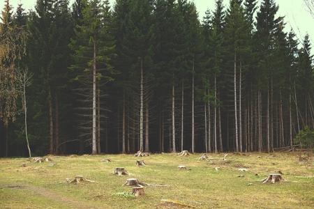 deforestacion: bosque de la deforestación borde, borde de madera de la naturaleza de la deforestación,