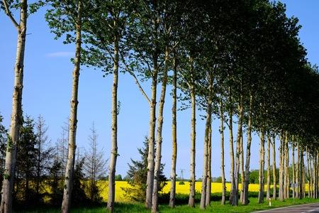 along: Trees along the road trees, tree, green landscape along