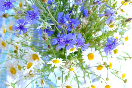 daisys: Daisies and cornflowers background, daisys beautiful nature