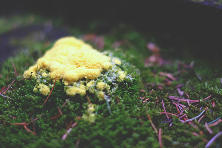 scrambled: Yellow forest mold Stock Photo
